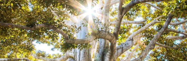 Paper Bag Tree : 紙袋樹