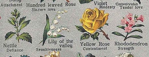 Art to explore the beauty and meaning of flowers