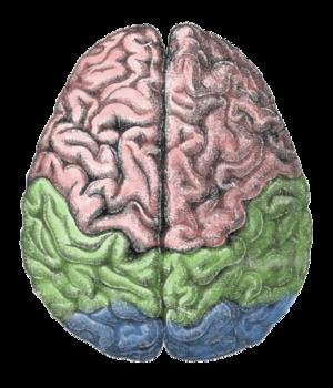Brain – Based Learning