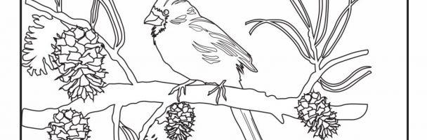Winter Cardinal Coloring Sheet Handout