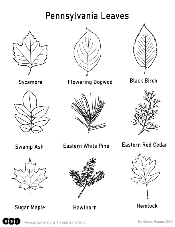 Pennsylvania Trees Handout