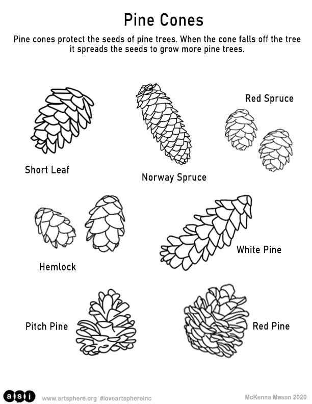 Pine Cone Handout