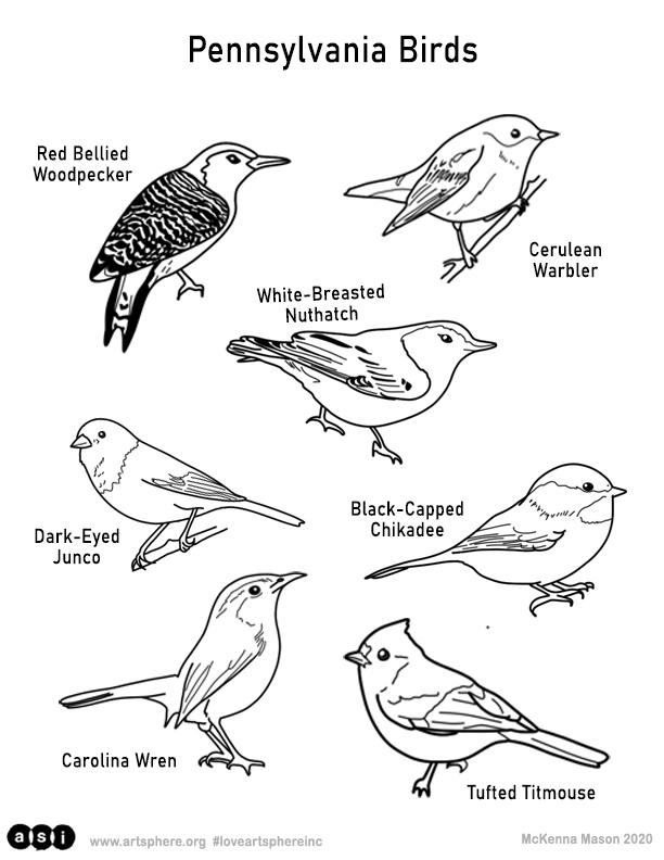 Birdwatching Handout