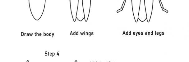 Cicada Handouts