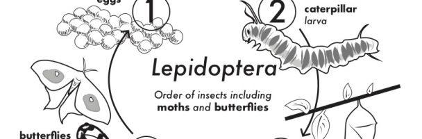 Fuzzy Caterpillar Song & Handout