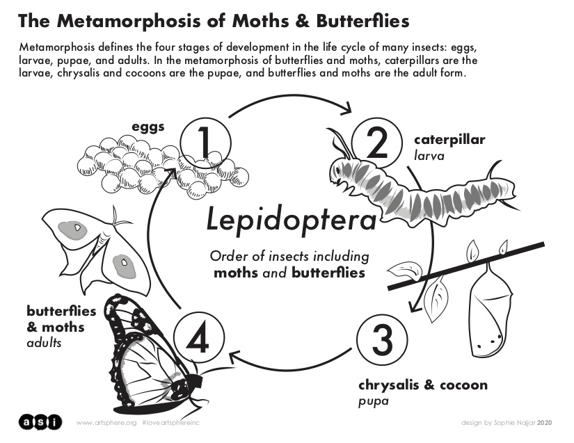 Click here to download the metamorphosis handout PDF