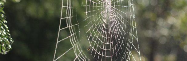 Practice Sensory Mindfulness like Spider-Man