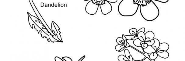 Pennsylvania Wildflowers Handout
