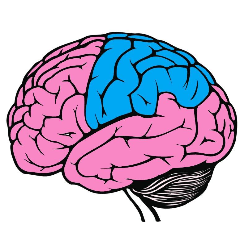 Parietal Lobe highlighted in blue