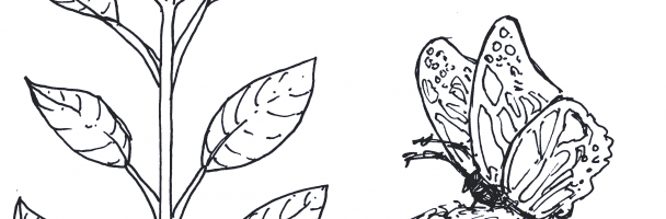 Let's Learn About Milkweed!