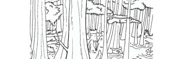Draw Wetland Wildlife Handout