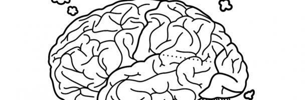 Lobes of the Brain Handout